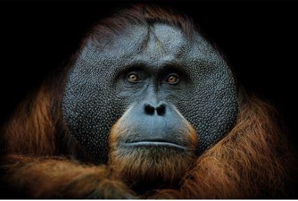 Smart Monkey Alu Art