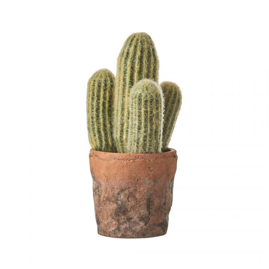 Woestijn Cactus in pot