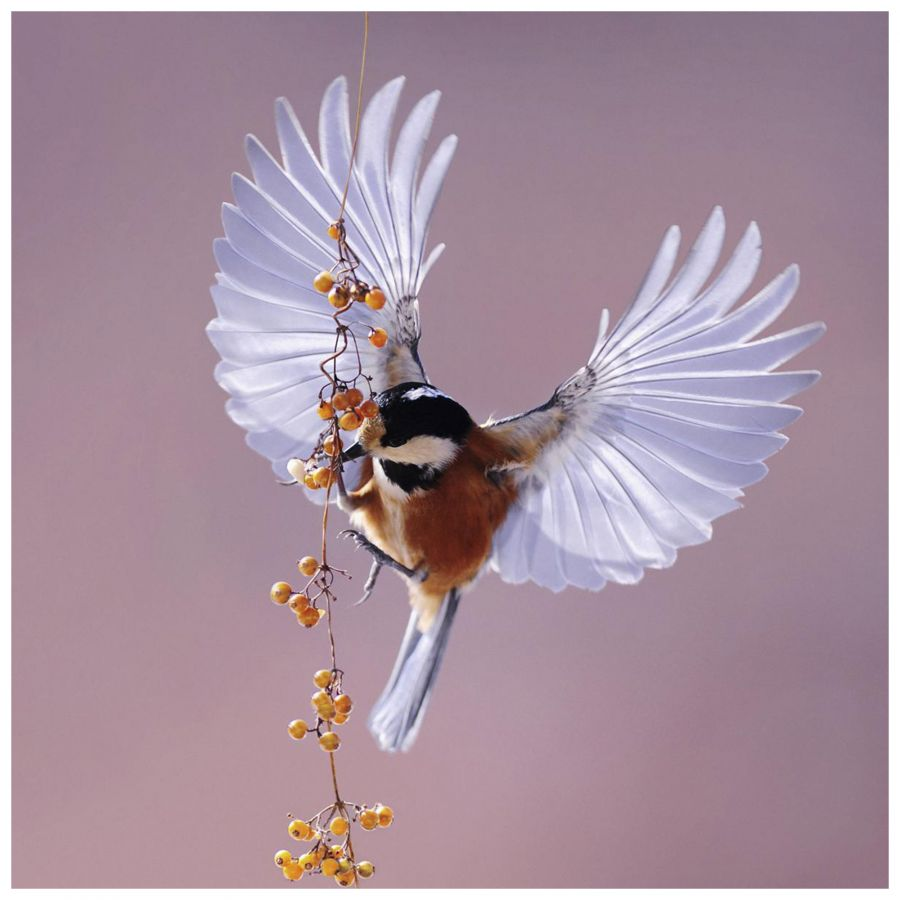 Bright Wings wanddeco